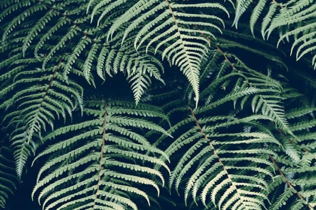 xml processing fern leaves